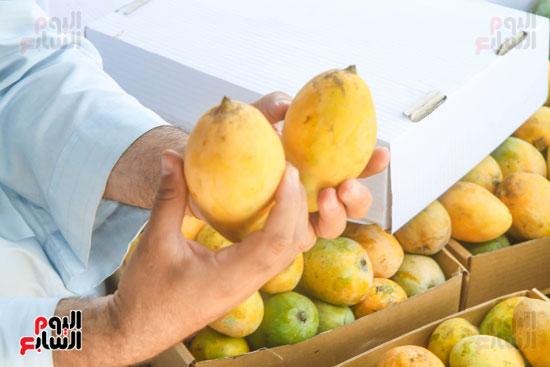 فاكهة الصيف