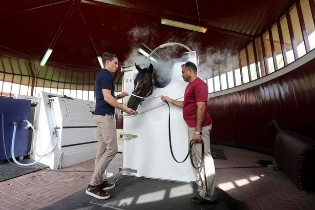 0_Dubai-stables-gives-prize-racehorses-cryotherapy (4)