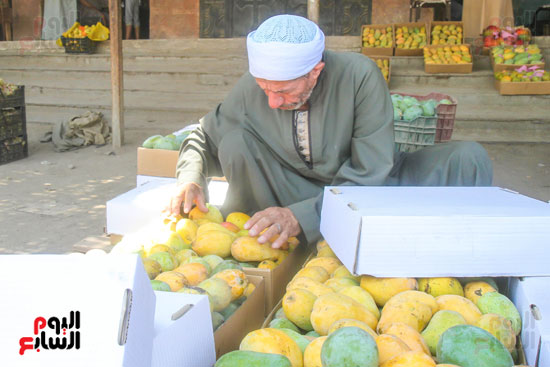 تجار المانجو (2)