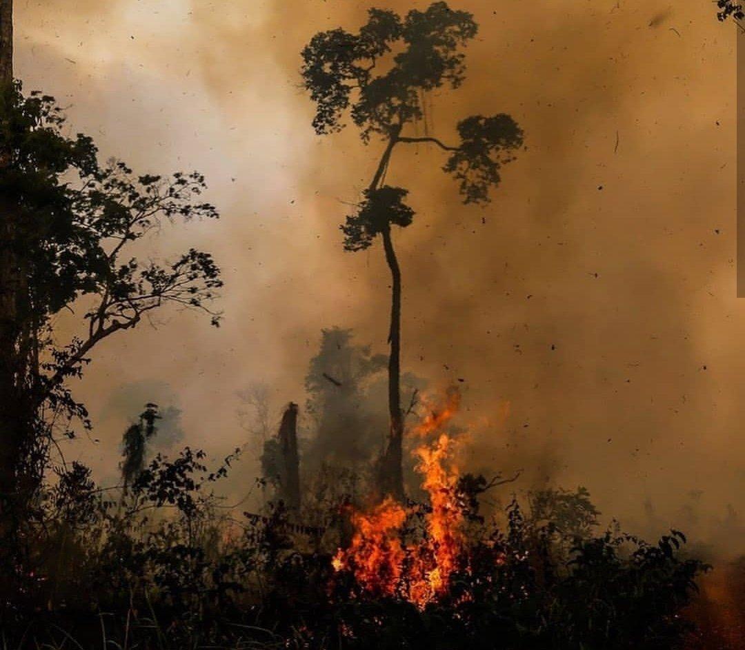 النيران تأكل الأشجار