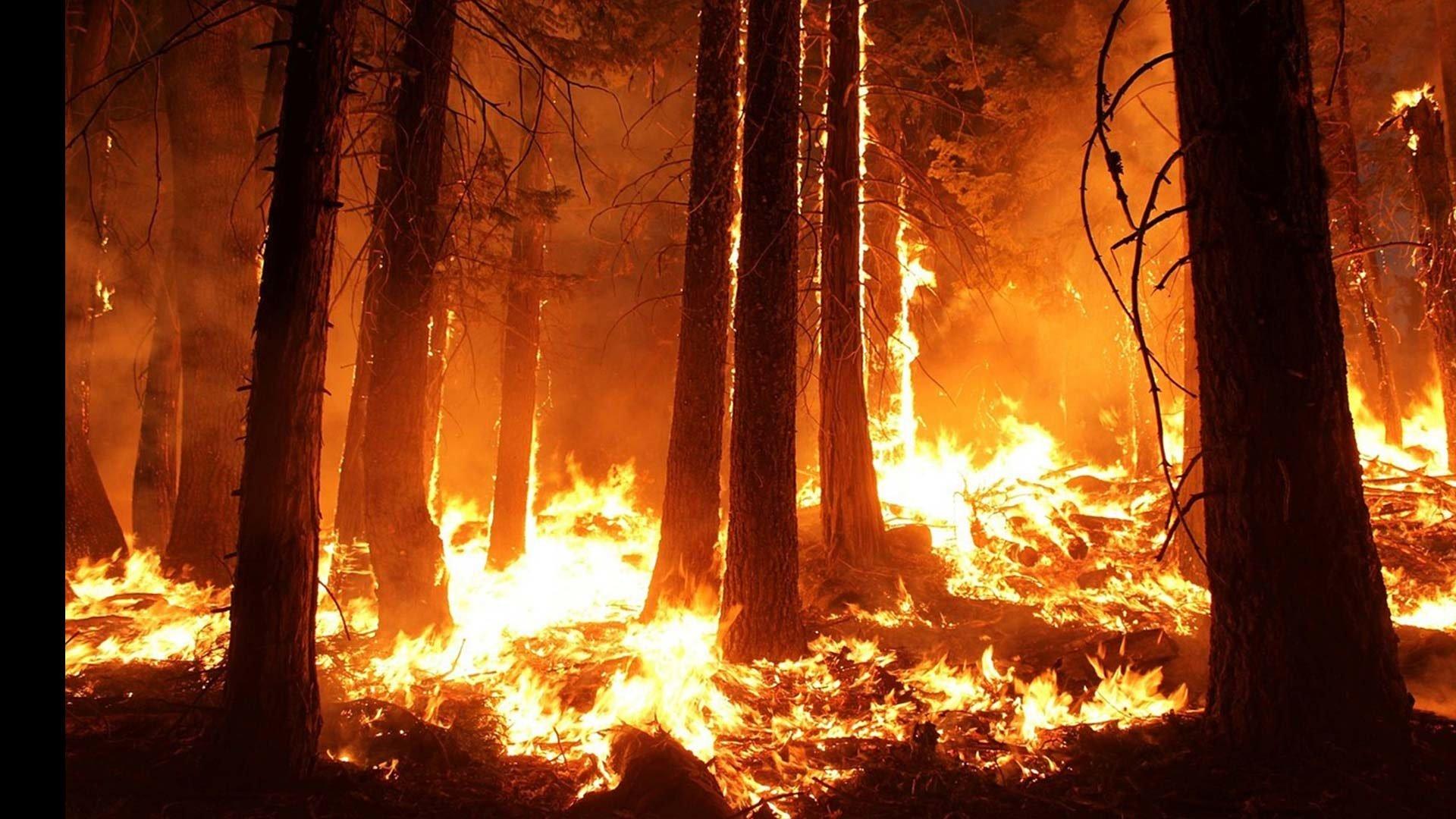 جانب من النيران