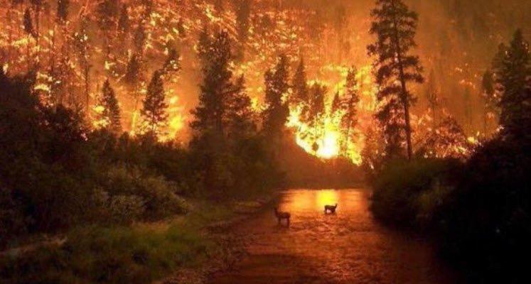 حرائق غابات الأمازون
