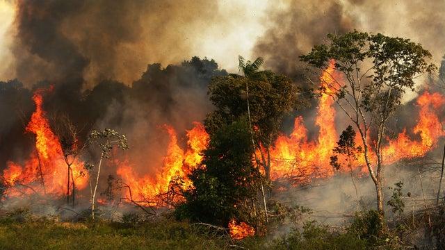 حرائق الغابات فى الأمازون