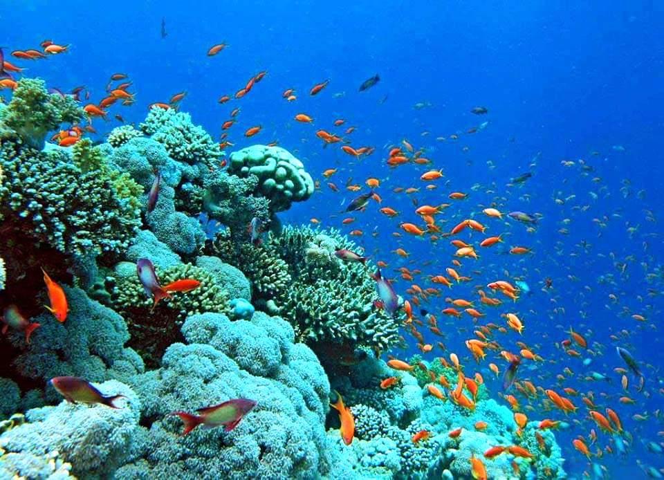 البحر الأحمر (11)
