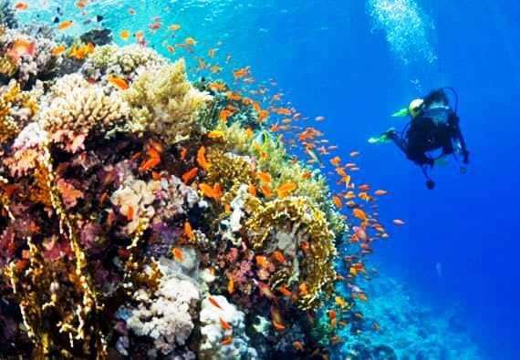 البحر الأحمر (12)