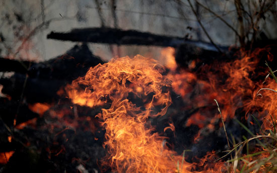 النيران تلتهم مساحات واسعة من الغابات