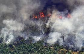 حرائق غابات الامازون