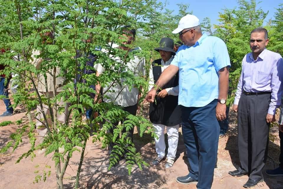 محافظ الوادى الجديد يتفقد مشروع زراعة أشجار المورينجا (4)