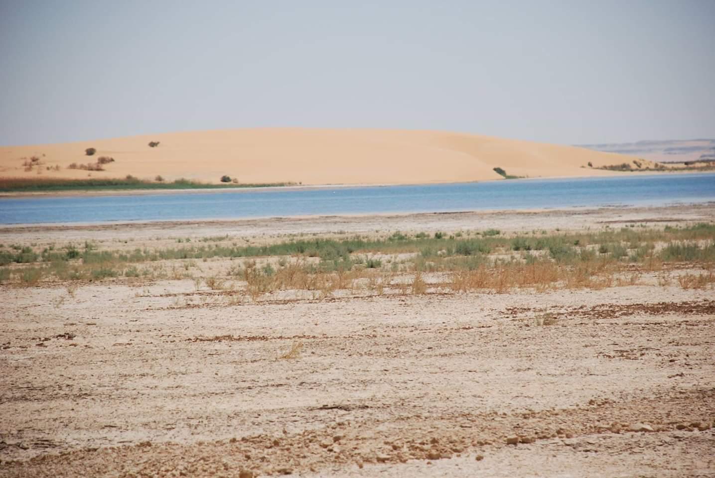 بحيرة مفيض توشكى (8)