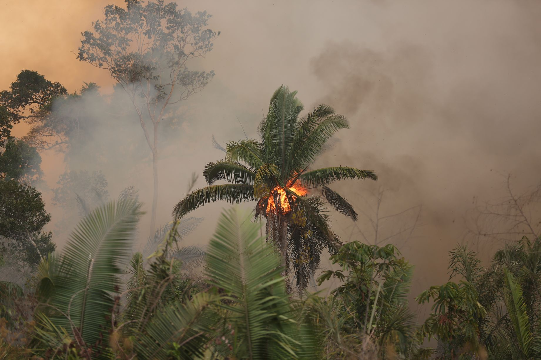 0_AmazonFires_PortoVelho_RO__24082019_c_WWF-Brasil_015JPG