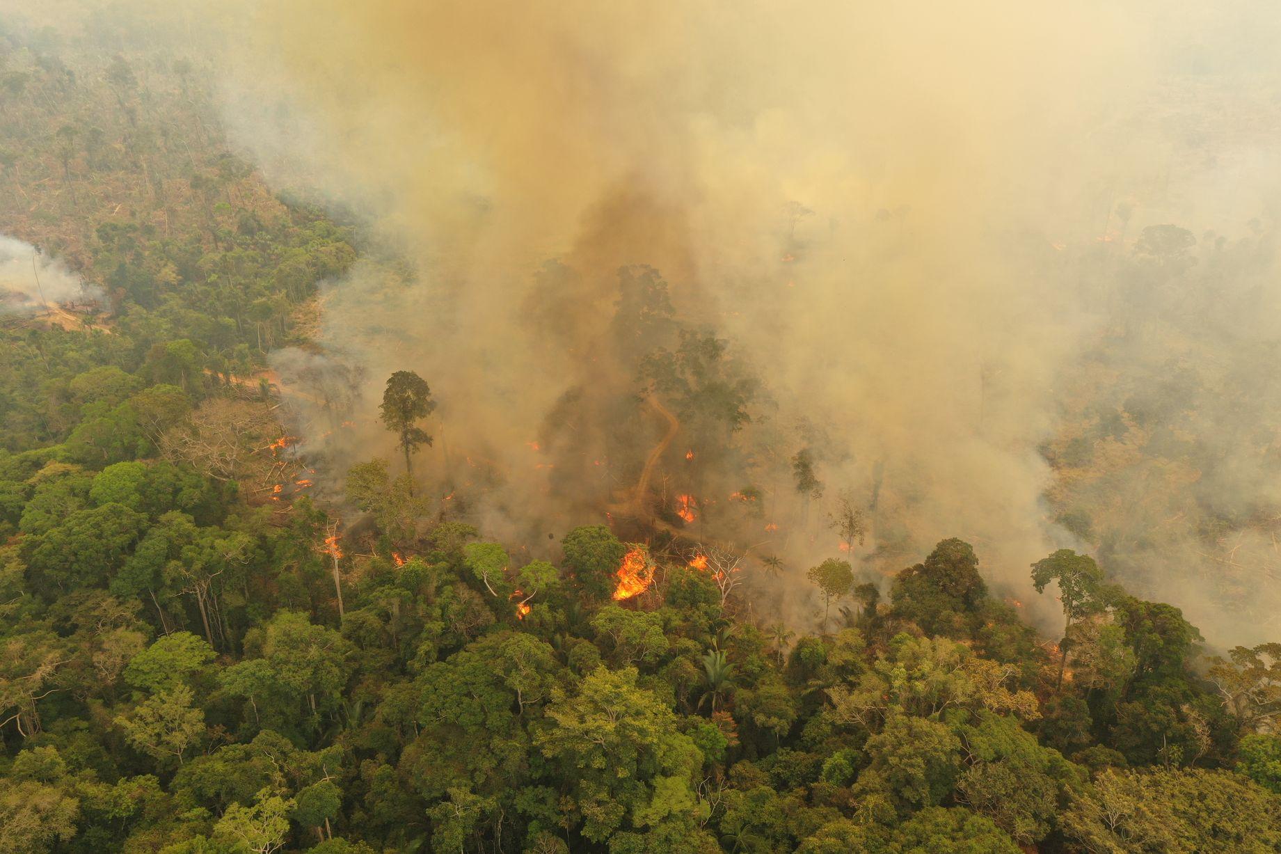 0_AmazonFires_PortoVelho_RO__24082019_c_Michael_Dantas_WWF-Brasil_003JPG
