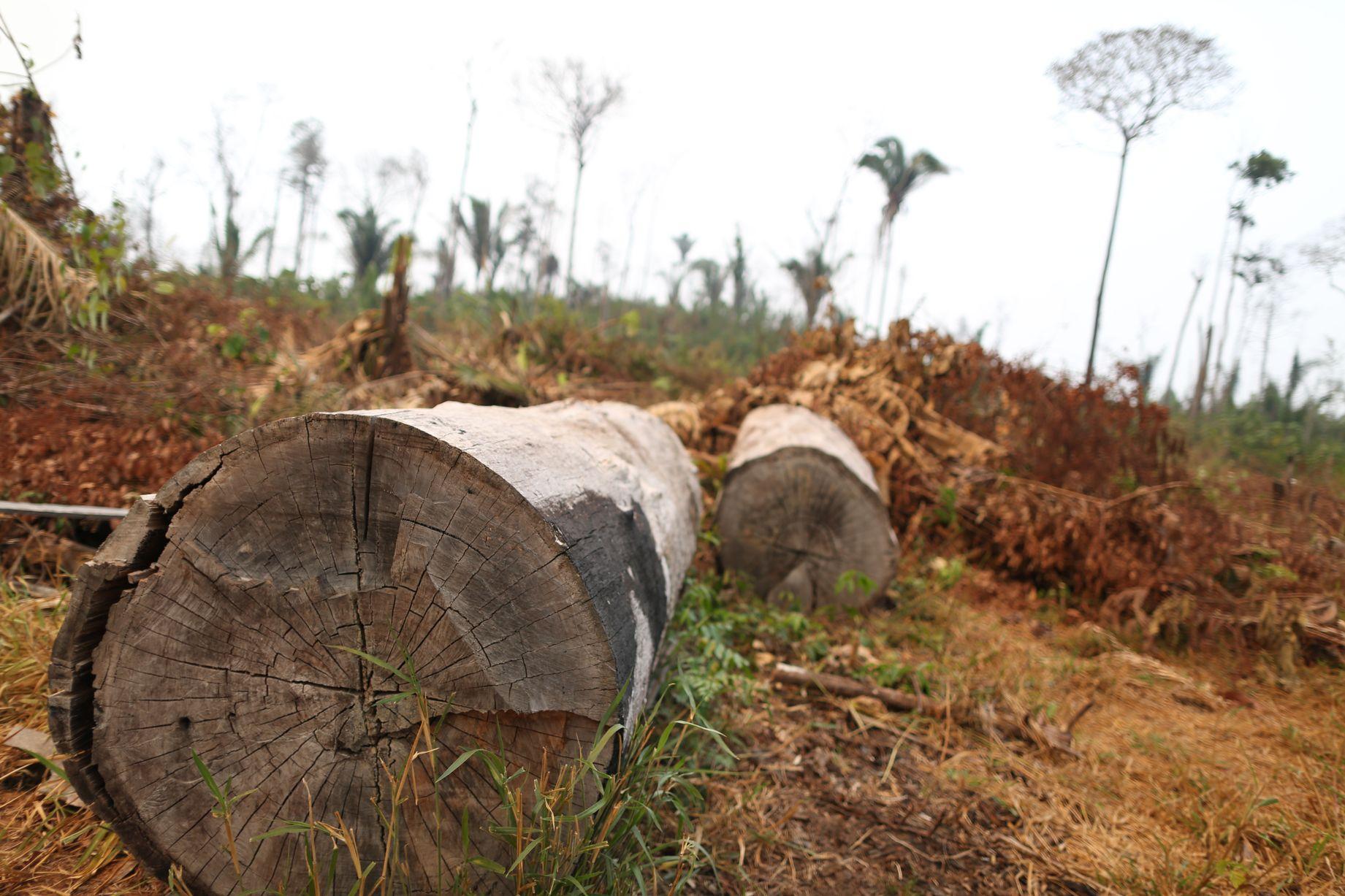 0_AmazonFires_PortoVelho_RO__24082019_c_WWF-Brasil_010JPG