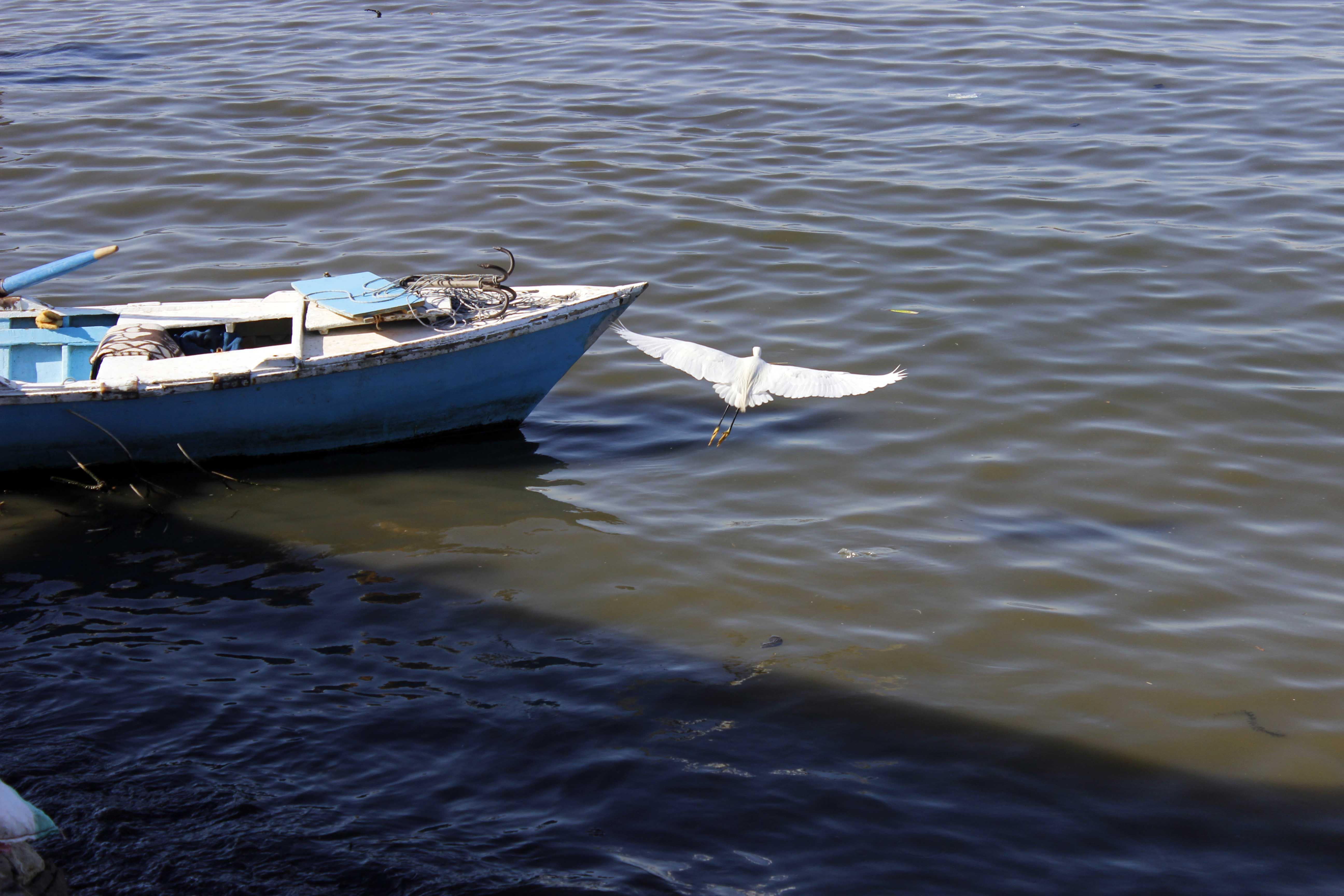 البحيرات المرة بالإسماعيلية (7)