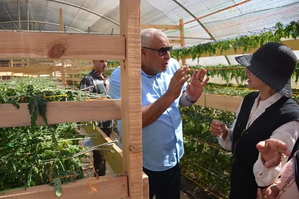 محافظ الوادى الجديد يتفقد مشروع زراعة أشجار المورينجا (5)
