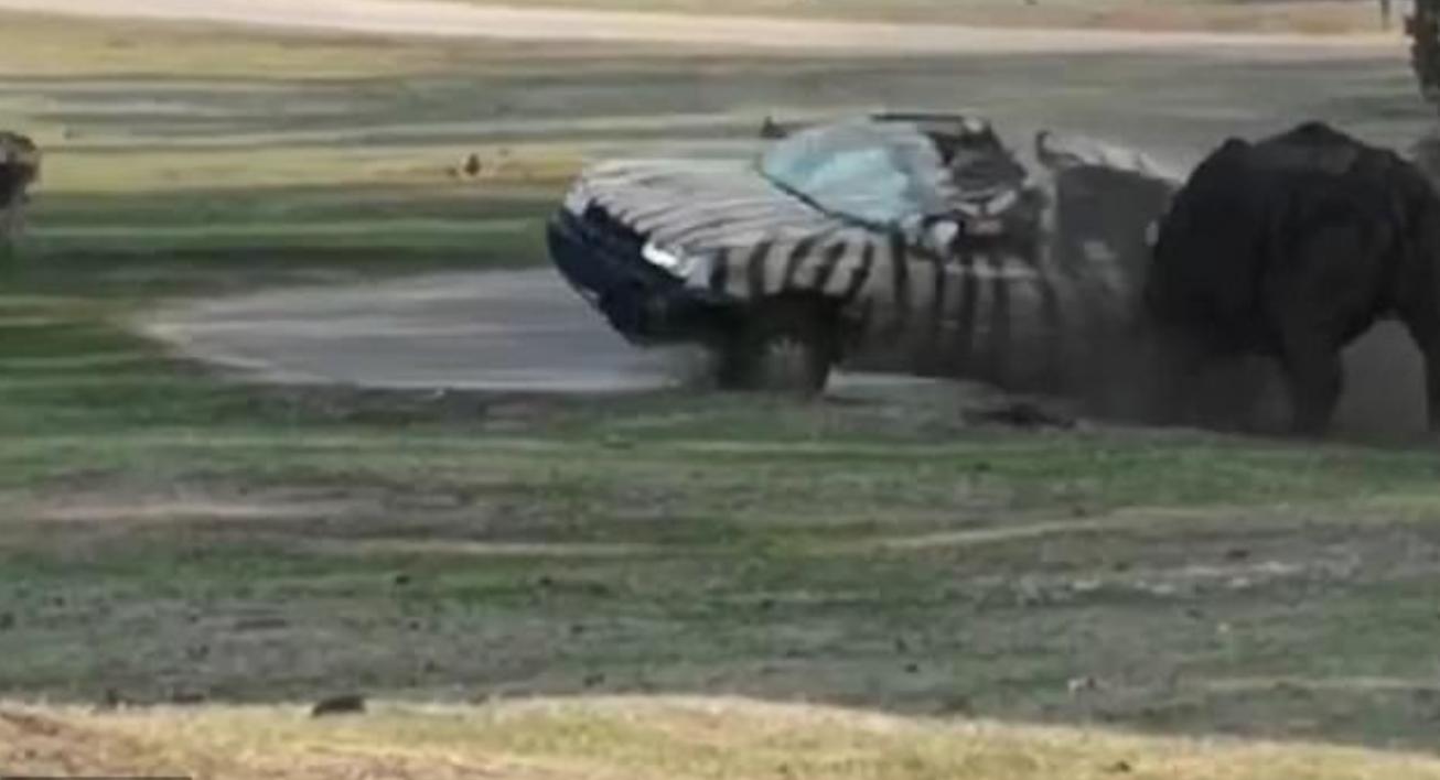 وحيد القرن يهاجم حارسة غالحديقة