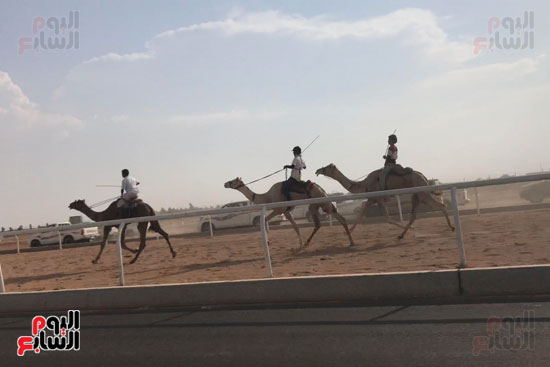 انتصار جديد لمصر فى سباق ولى العهد للهجن بالسعودية (8)
