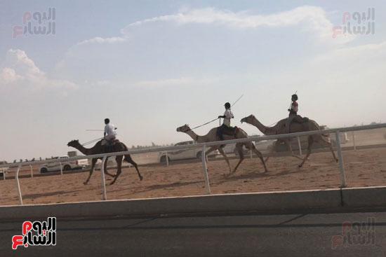 انتصار جديد لمصر فى سباق ولى العهد للهجن بالسعودية (6)