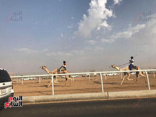 انتصار جديد لمصر فى سباق ولى العهد للهجن بالسعودية (9)