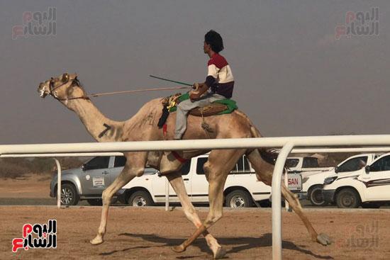 انتصار جديد لمصر فى سباق ولى العهد للهجن بالسعودية (12)