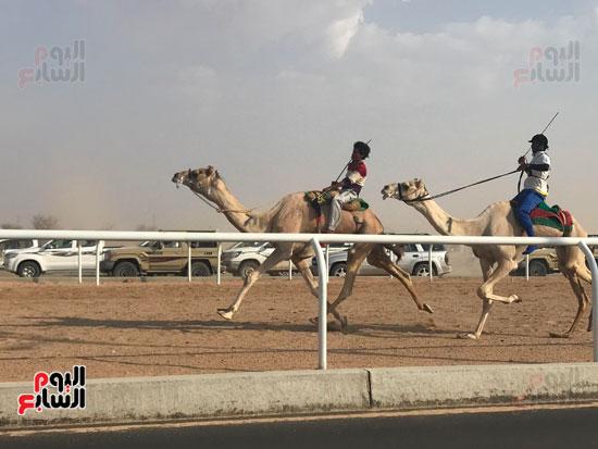 انتصار جديد لمصر فى سباق ولى العهد للهجن بالسعودية (13)