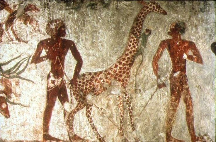 An ancient painting depicting the existence of a giraffe in Nubia and Egypt