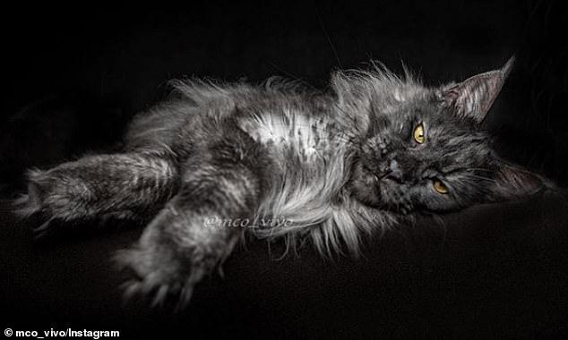 قط يثير الجدل على الأنترنت لشكله الغريب (9)