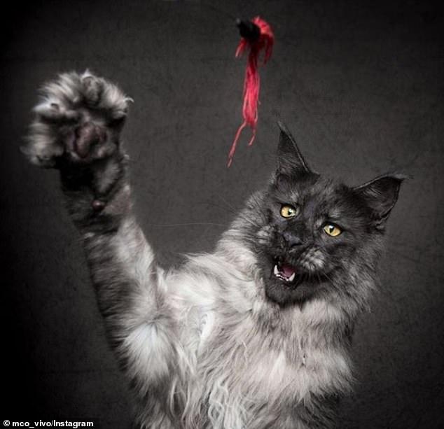 قط يثير الجدل على الأنترنت لشكله الغريب (1)