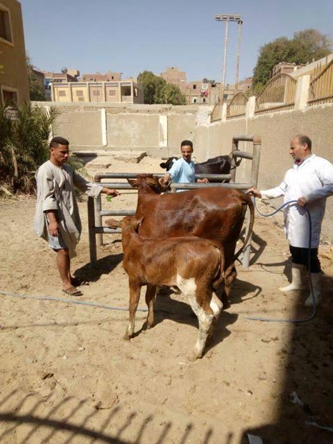 المنيا تنفذ برنامج تعزيز المواطنة  (8)