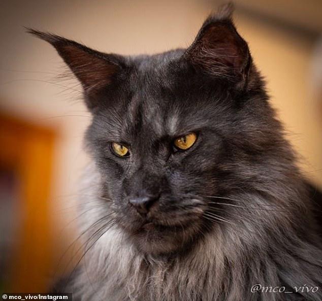 قط يثير الجدل على الأنترنت لشكله الغريب (2)