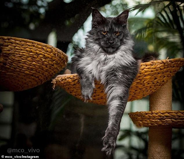 قط يثير الجدل على الأنترنت لشكله الغريب (4)