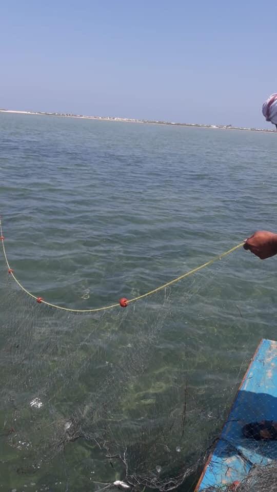 ضبط أدوات صيد مخالفة ببحيرة البردويل  (2)