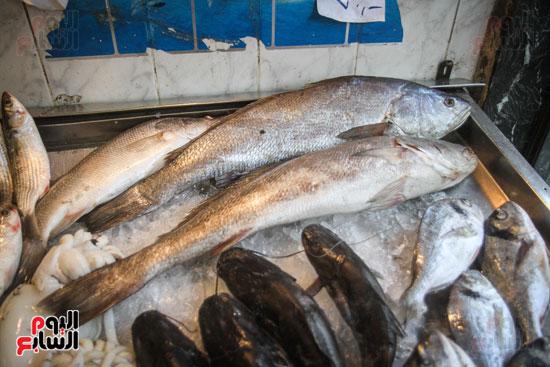 أنواع مختلف للسمك
