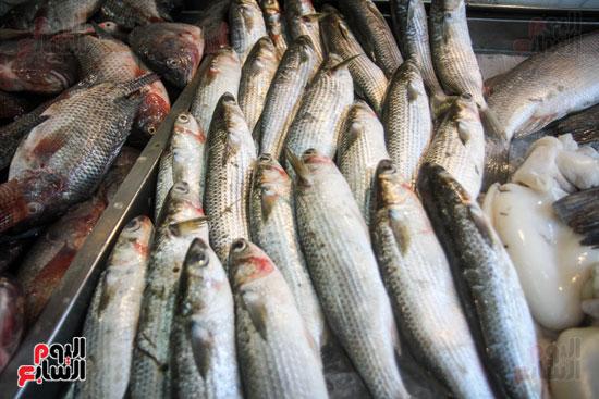 تنوع الأسماك