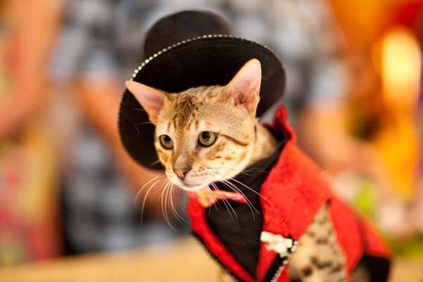 عرض أزياء القطط (14)