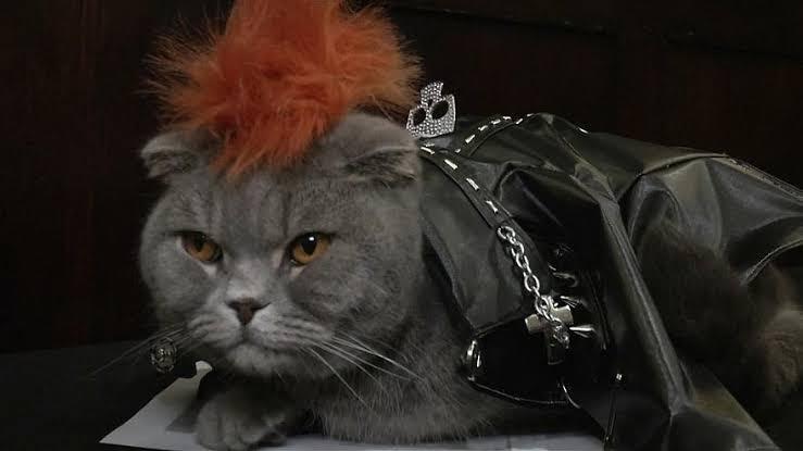 عرض أزياء القطط (13)