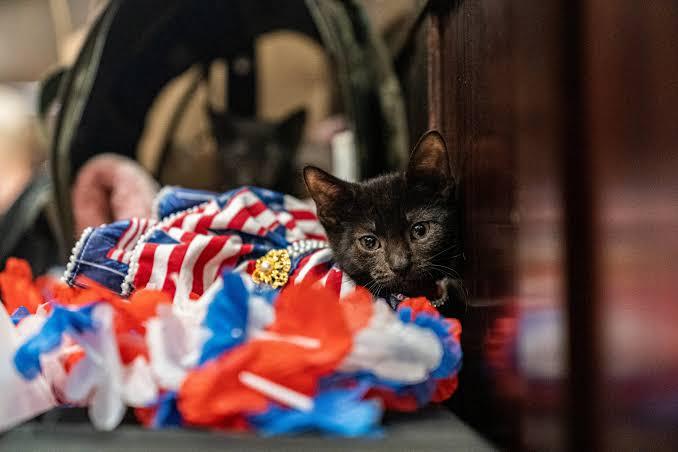 عرض أزياء القطط (9)
