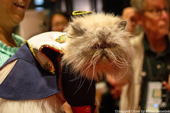 عرض أزياء القطط (7)