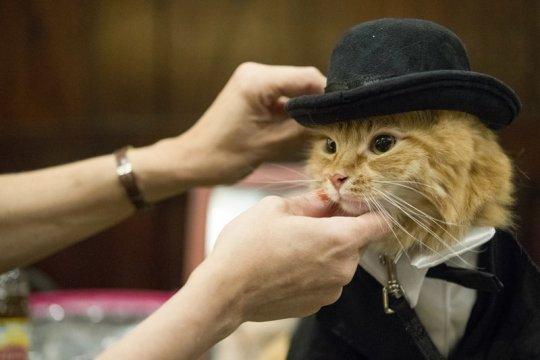 عرض أزياء القطط (2)