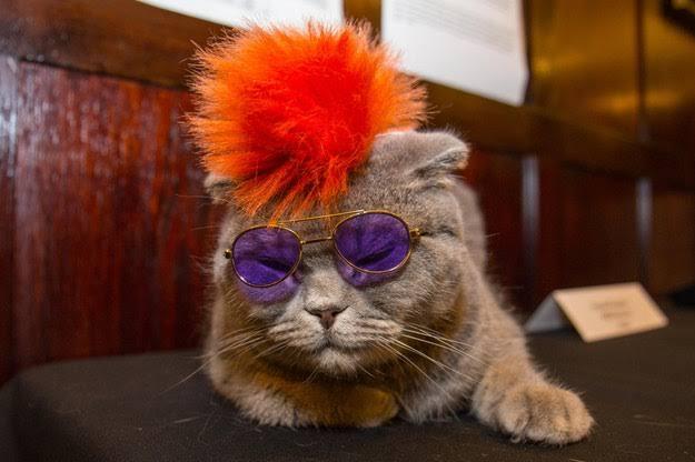 عرض أزياء القطط (8)
