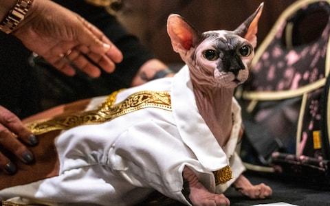 عرض أزياء القطط (1)