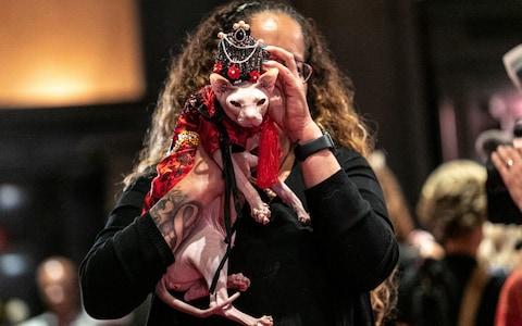 عرض أزياء القطط (16)