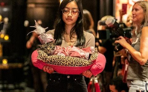 عرض أزياء القطط (18)