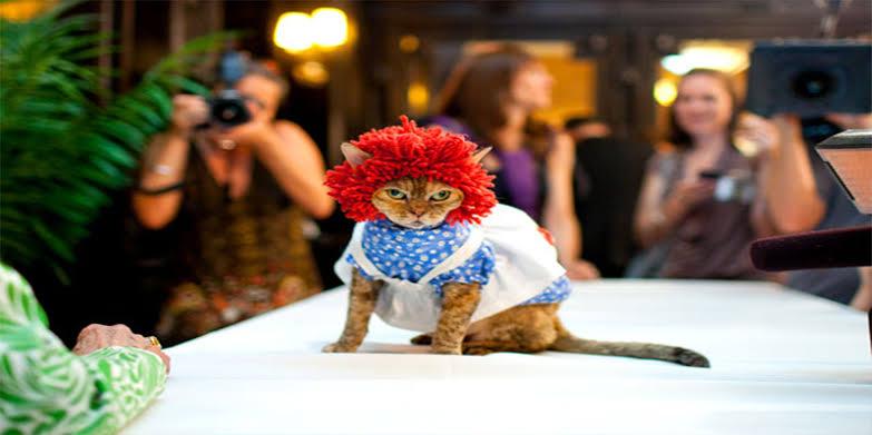 عرض أزياء القطط (12)