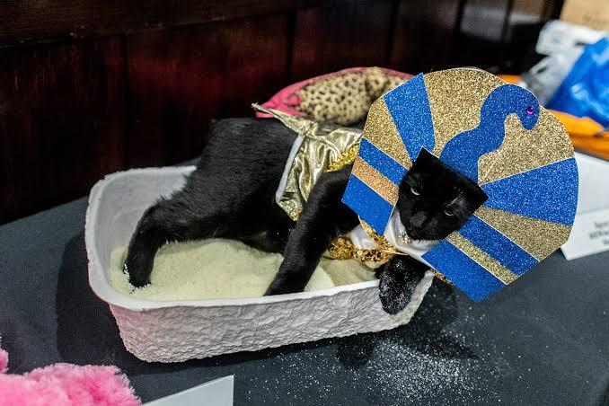 عرض أزياء القطط (4)