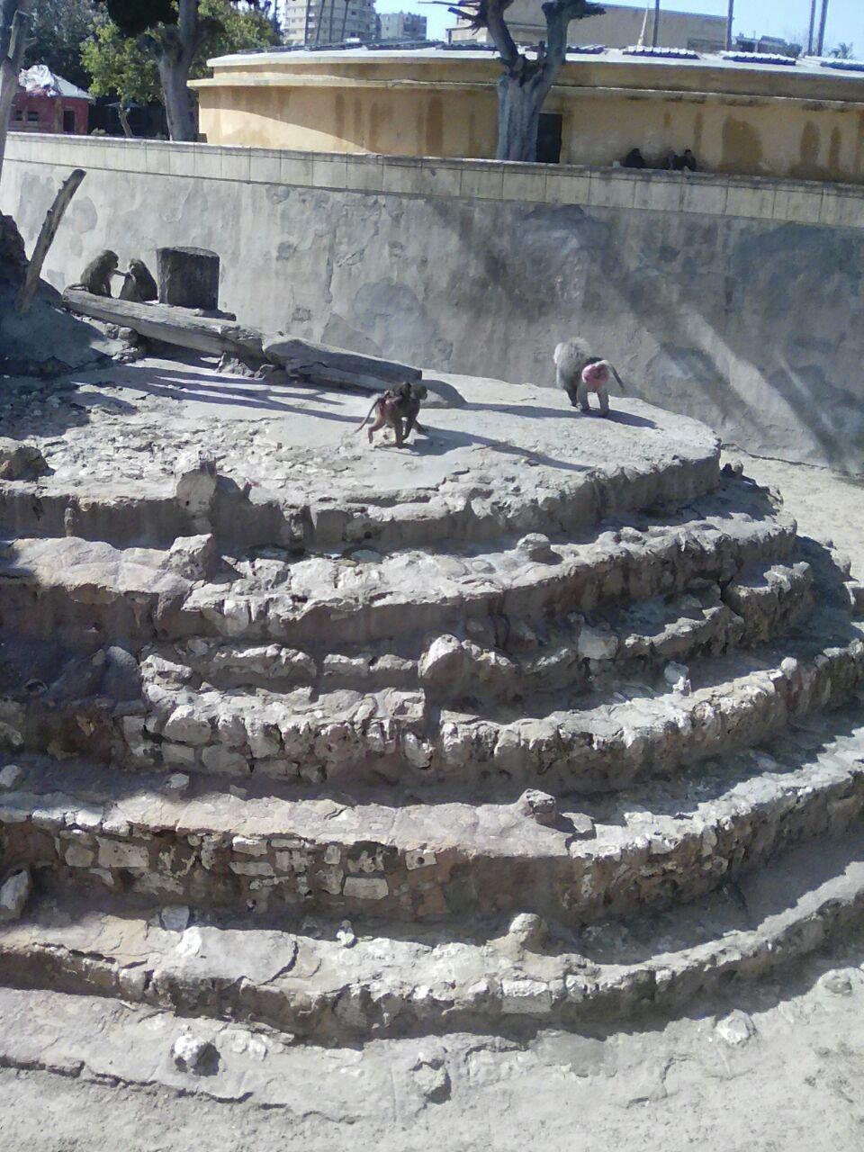 تطوير حديقة حيوان الاسكندرية  (1)