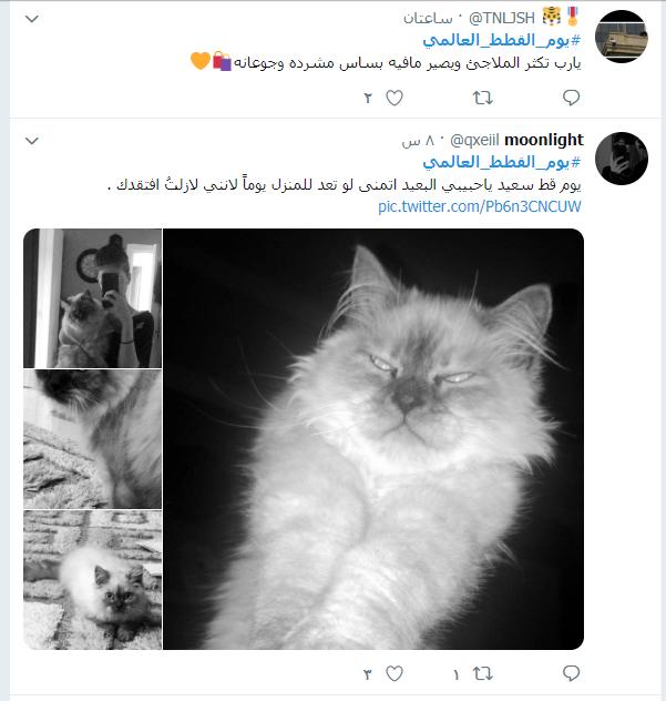 يوم القطط العالمى (4)
