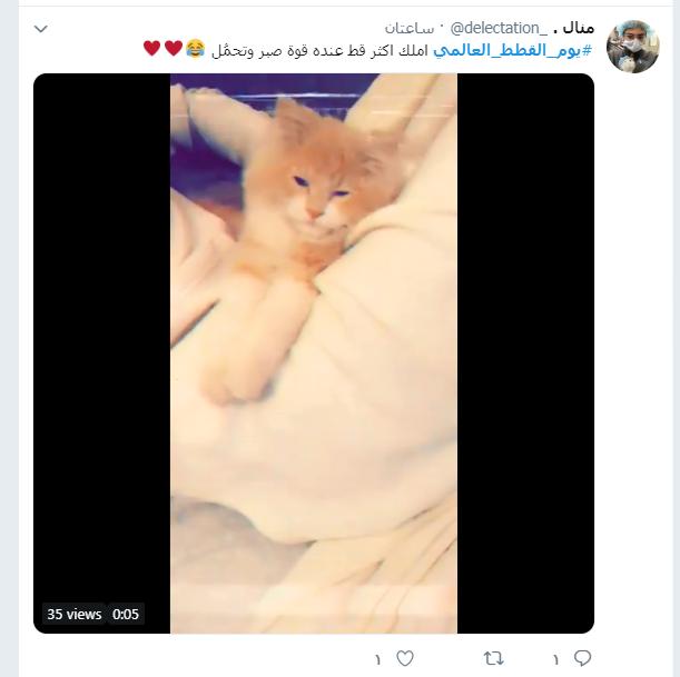 يوم القطط العالمى (7)