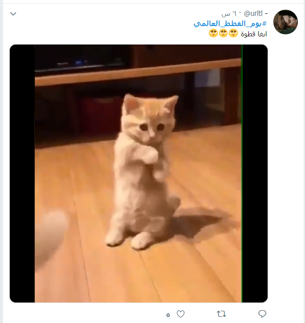يوم القطط العالمى (6)