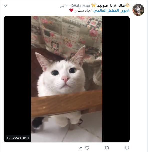 يوم القطط العالمى (10)