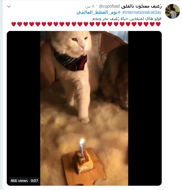 يوم القطط العالمى (1)